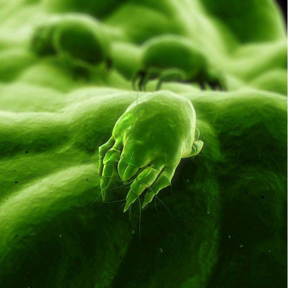 Alergia a los ácaros- National Allergy Peru